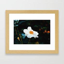 November Rose Framed Art Print