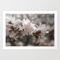 Magnolia Dreaming Art Print