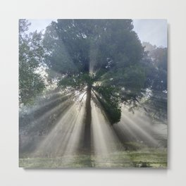 Sunrays Through The Pine. Metal Print