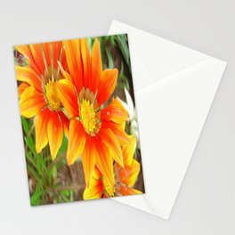 Vibrant Yellow and Vermillion Gazania Rigens Flower Stationery Cards
