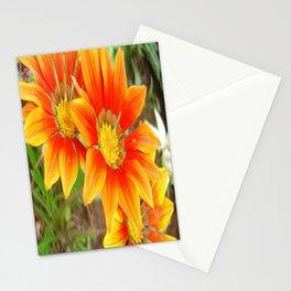 Vibrant Yellow and Vermillion Gazania Rigens Flower Stationery Cards