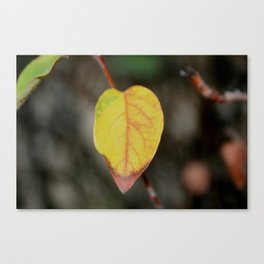 Red and Yelow Leaf Canvas Print