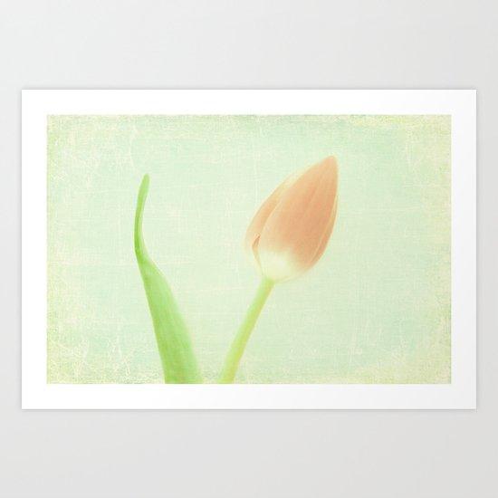 Tulip Art  Art Print
