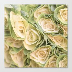 Greenyellow roses Canvas Print