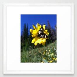 Sunflower and Moth Framed Art Print