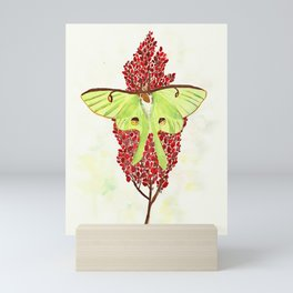 Luna Moth On Sumac Mini Art Print