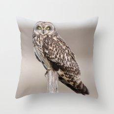 Short Eared Owl Throw Pillow