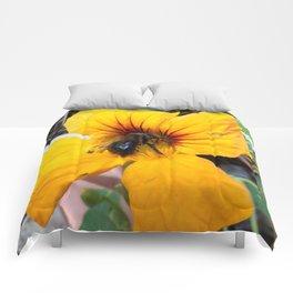 Black bee Comforters