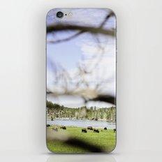 where the buffalo roam iPhone & iPod Skin