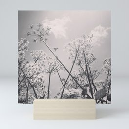 Cow Parsley Mini Art Print