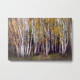 Golden birch grove Metal Print