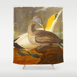 Gannet Bird Shower Curtain