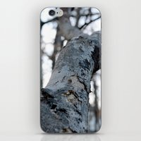 the hound iPhone & iPod Skins featuring HOUND by smmrkllr