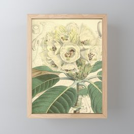 Flower 4924 rhododendron falconeri Dr Falconer s Rhododendron1 Framed Mini Art Print