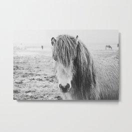 WILD HORSE / Iceland Metal Print
