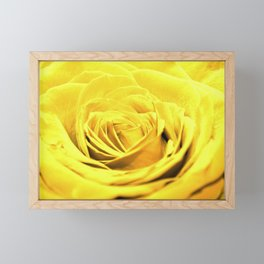 Yellow rose Framed Mini Art Print