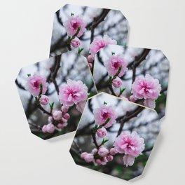Sakura III Coaster