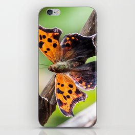 Eastern Comma Butterfly Landscape with Art Filter iPhone Skin