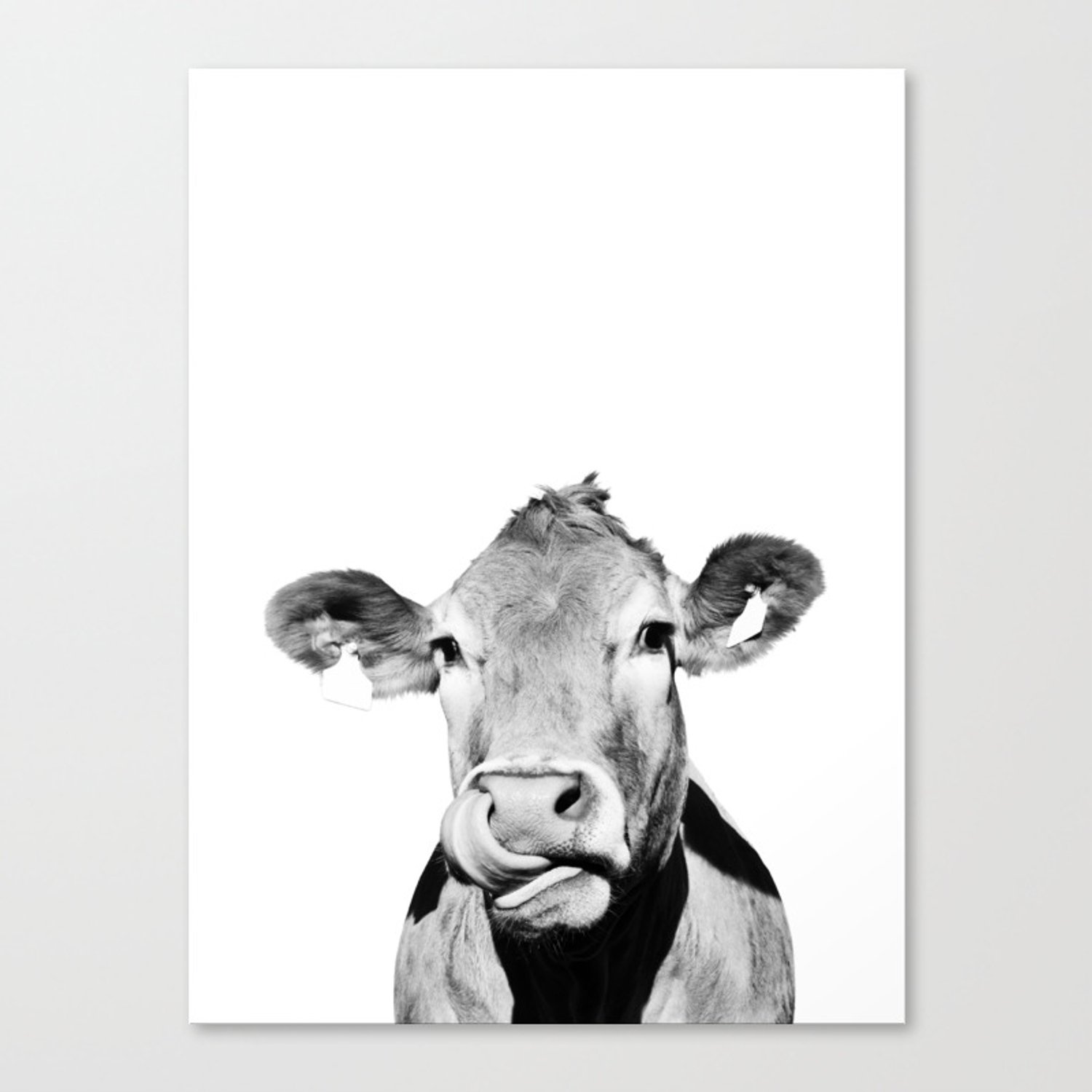 Cow photo black and white canvas print