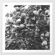 monochrome apples Art Print