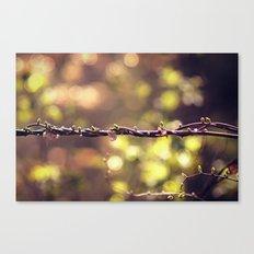 Twisted Vine Canvas Print