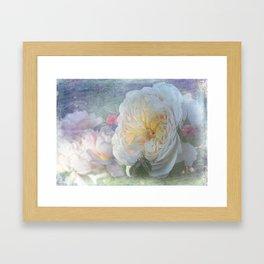 English ROse - Emanuelle Framed Art Print
