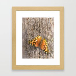 Compton Tortoiseshell Butterfly Framed Art Print