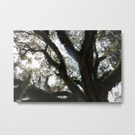 Sunlight Through The Oak Metal Print