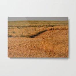 Red Fox on golden prairie Metal Print