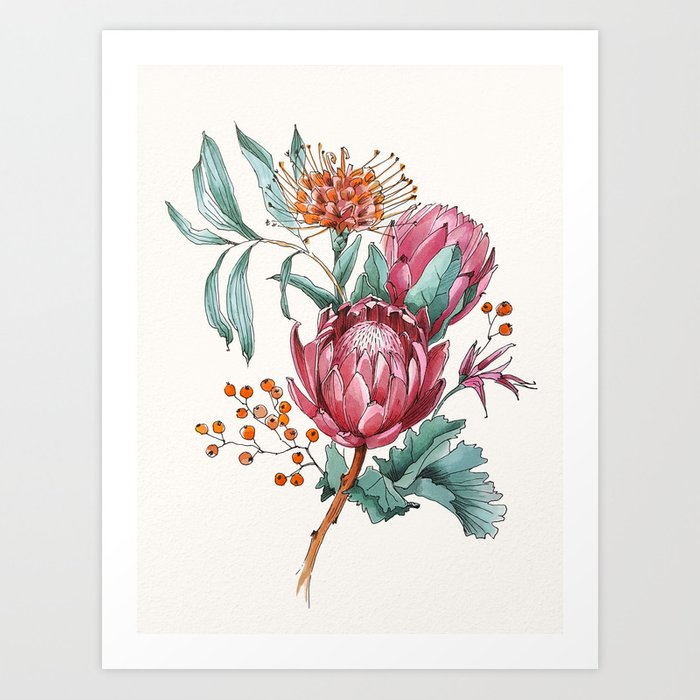 King Protea Flowers Watercolor Illustration Art Print By