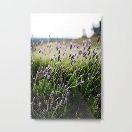 Island Lavender Metal Print
