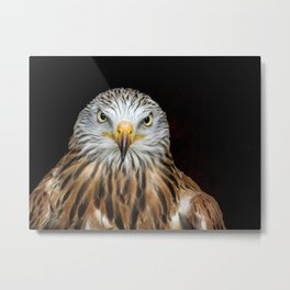 Red kite Metal Print