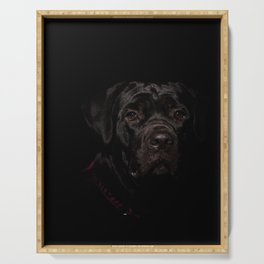 Cane Corso Puppy Low Key Animal / Dog Photograph Serving Tray