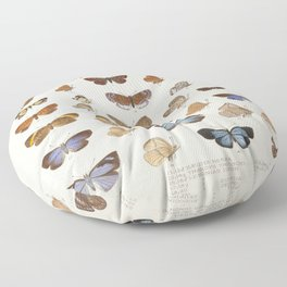 Vintage Scientific Insect Butterfly Moth Biological Hand Drawn Species Art Illustration Floor Pillow
