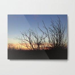 """Mesquite Bush at Sundown"" Metal Print"