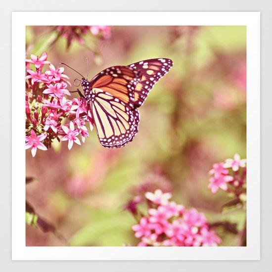Monarch Sunlight Art Print