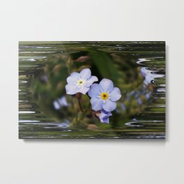 Forget me not flowers Metal Print