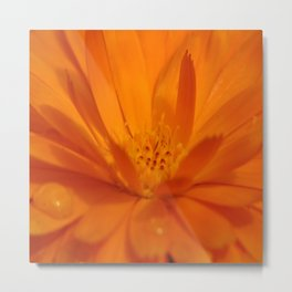 Sunrise Dew Metal Print