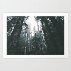 Forest XVIII Art Print