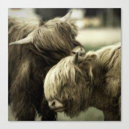Highland Cattle I Canvas Print