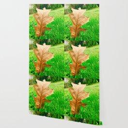 A Walk Through The Seasons Wallpaper