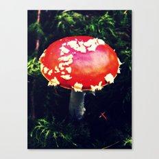 Fairytale Toadstool Canvas Print