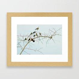 Birds of a Feather Flock Together Framed Art Print