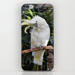 Sulfur-Crested Cockatoo Salutes the Photographer iPhone Skin