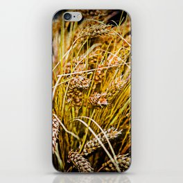 Ears Of Wheat. Thanksgiving theme iPhone Skin
