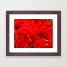 Red tulips  Framed Art Print