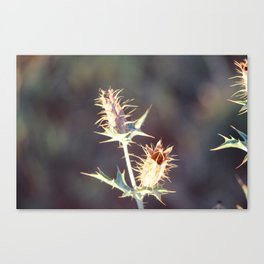 Flowers with thorns Canvas Print