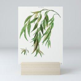 Weeping willow (Salix babylonica) from Traité des Arbres et Arbustes que l'on cultive en France en p Mini Art Print