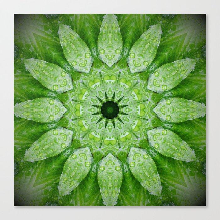 Green Mandala Plant Leinwanddruck