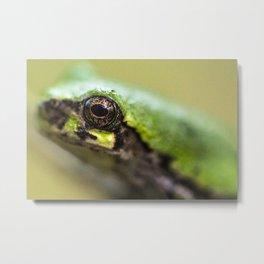 Tree Frog eye  Metal Print